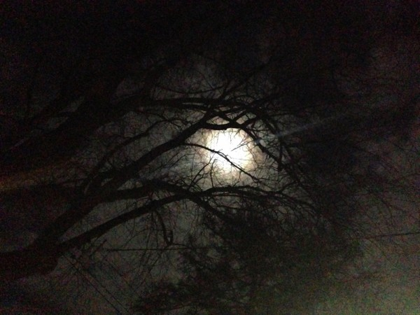 the full moon through the trees